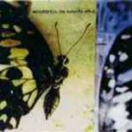 Cover - The Butterfly Effect